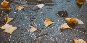 rainwater and leaves